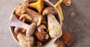 5 Mushrooms to Balance the Immune System